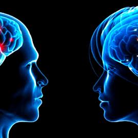A férfi agy és amit tudnod kellene róla Nőként